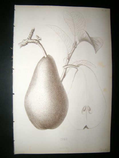 Pomologie de La France C1865 Fruit Print. Cure, Pear 18 | Albion Prints